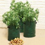 Produktbild - Kartoffel Pflanztaschen - 3er Set